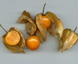 Andenbeere, Kapstachelbeere, Physalis peru, goldene Beere: eine Frucht mit vielen Namen und gesundheitlichen Vorteilen