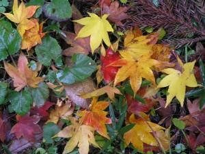 Herbst: der einen schönste Jahreszeit, der anderen Greul