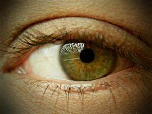 Unser wichtigstes Sinnesorgan: Die Augen