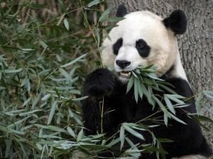 Nicht nur für Pandas: Eukalyptus und seine vielen gesundheitlichen Vorzüge