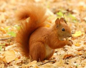 Vorräte anlegen ist längst nicht nur für Eichhörnchen