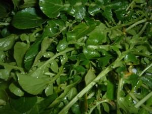 Brunnenkresse ist ein äußerst gesundes Gemüse, das oft unterschätzt wird