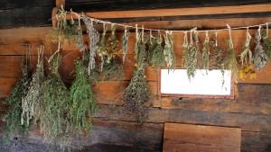 Kräuterheilmittel - erste Hilfe aus dem eigenen Garten