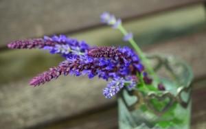 Natürliches Powerhaus gegen Kopfschmerzen: Lavendel