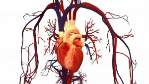 Seine Komplexität macht das menschliche Herz anfällig für eine Vielzahl von Erkrankungen