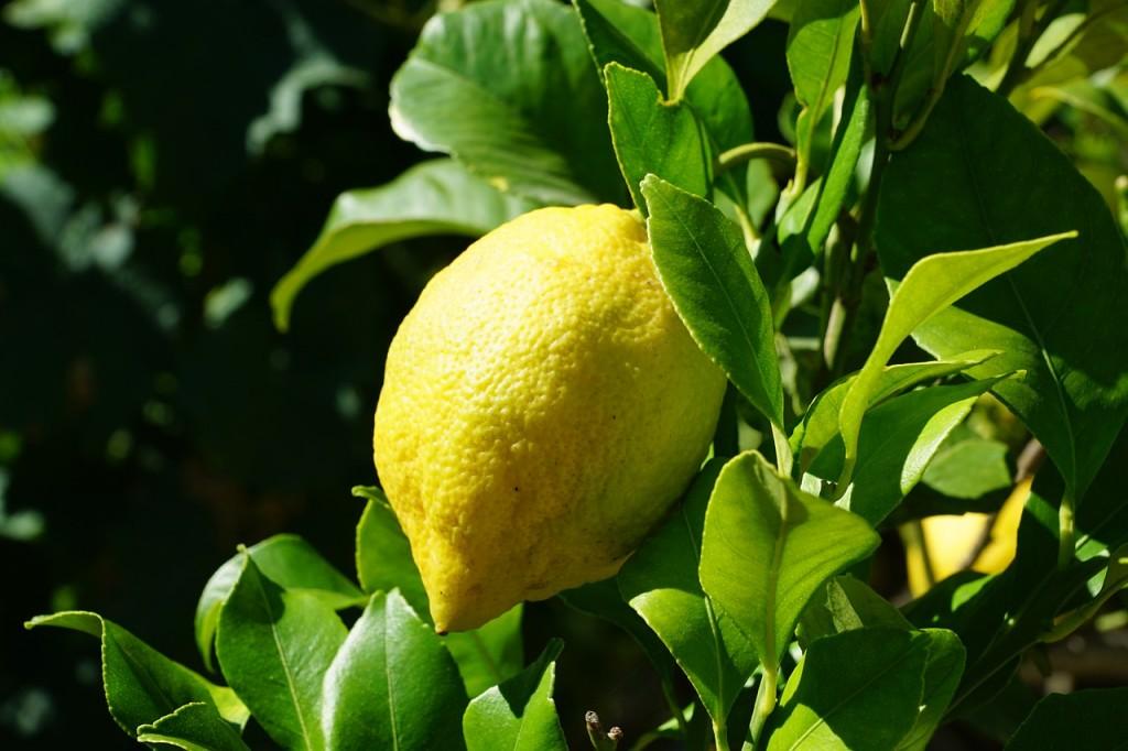Wenn dir das Leben Zitronen gibt ... dann pflanze deinen eigenen Baum