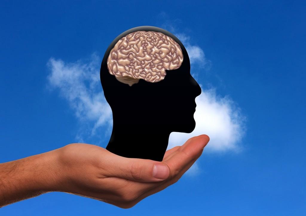 Das Gehirn: Ein komplexes Wunderwerk