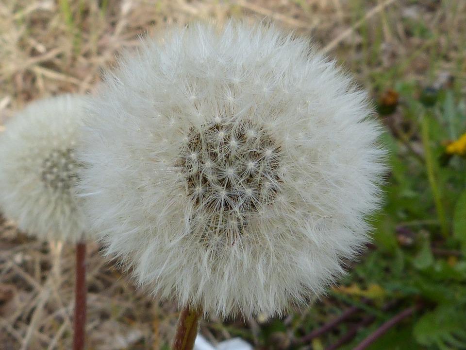 Mit diesen Tipps, kannst du trotz Frühlingsallergien bald wieder gut durchatmen Langsam aber sicher macht sich der Frühling und damit leider auch die Frühlingsallergien breit. Auch wenn das grüne Gras und die bunten Blumen und aufblühenden Bäume noch so schön sind, ist der Frühling nicht für jedermann ein Vergnügen. Leider steht der Frühling auch für Pollen und andere Schwebeteilchen, die empfindliche Nasennebenhöhlen reizen und unsere Allergien aus dem Tiefschlaf