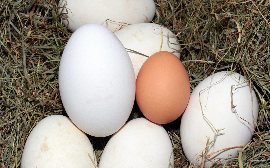 egg-1268339_1280